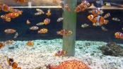 《海底总动员》幕后特辑