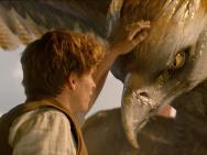 《神奇动物》首周近3亿 IMAX版跃幕视效更逼真