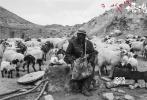 由西德尼玛、杨秀措领衔主演,万玛才旦导演的第五部藏语电影《塔洛》将于12月9日全国限量公映。该片已于11月25日开始在青海、甘肃、西藏三地进行超前点映,不仅口碑再次爆棚,在点映票房成绩上也再创新高。