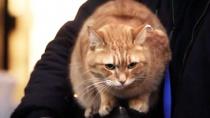 《流浪猫鲍勃》圣诞节片段 萌喵鲍勃街头送圣歌