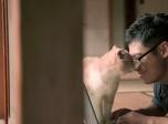《猫咪后院》曝预告片 废材小说家变身猫奴