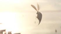 《神奇动物在哪里》删减片段 神奇小虫叛逃