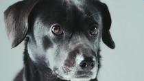 《营救汪星人》选角预告 全国急招百只萌犬演员