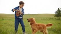 《一条狗的使命》原片片段
