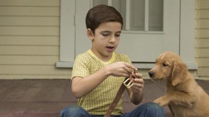 """《一条狗的使命》情感依旧细腻 引起""""宠物热"""""""