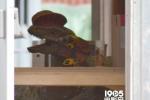 《侏罗纪世界》导演赞续集超前作 恐龙会成武器