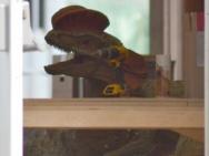 《侏罗纪世界2》曝最新片场照 双脊龙模型亮相