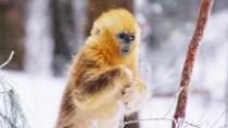 《我们诞生在中国》英文版片段 雪地起舞