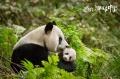 中国故事国际表达受关注 国产纪录片进入黄金期