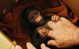 《猩球崛起3:终极之战》最新预告片