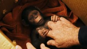 《猩球崛起3:终极之战》最新沙龙网上娱乐片