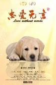 《忠爱无言》将上映 老人与狗彼此相伴温情动人