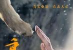 """电影《重返·狼群》将于6月16日全国上映,片方于今日曝光终极海报和""""导演讲述""""版预告。海报中人狼默契击掌,跨越种族的亲情令人动容,李微漪和亦风更是在预告中首次出镜剖白心迹,称小狼格林带来了人生无法复制的七年。此前参与过路演和点映的观众纷纷表示被这部凝聚着爱与生命的电影所震撼,称赞其为良心之作。"""