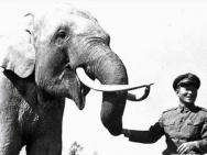 《大象林旺之一炮成名》历史课里不曾学到的感动