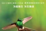 """《地球:神奇的一天》即将在8月领先全球上映。影片于今日发布一组""""为生而战""""角色海报,并首度曝光影片的正式片段。《地球:神奇的一天》将用幽默、亲密而又充满情感的态度,展示地球上丰富多样的野生动物鲜为人知的生命状态。它们""""为生而战"""",却同时有趣地生活!在最新发布的角色海报中,观众可以领略到来自极地与沙漠、丛林与草原中各种动物的风采。而在长达2分多钟的正片片段中,摄影机记录了在南美洲的热带雨林里,一场盘尾蜂鸟与蜜蜂之间令人窒息的生死大战。"""