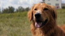 《一条狗的使命》日版预告片