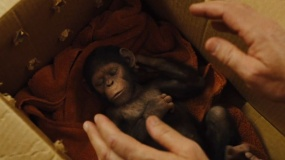 《猩球崛起3》特辑 当猩球崛起遇上动物世界