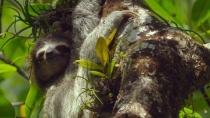《地球:神奇的一天》树懒蜂鸟企鹅正片片段