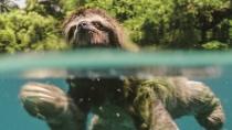 《地球:神奇的一天》树懒企鹅独角鲸特辑