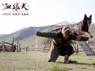 《血狼犬》蒙特利尔获银奖 中国西部优乐国际扬威国际