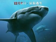 美国电影《鲨海》定档12.8 首款预告暗藏深海鲨机
