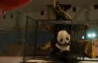 """《秀犬》首曝沙龙国际 熊猫宝宝成""""团宠"""""""