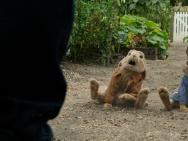 《比得兔》澳洲搭景 真实还原英伦夏季田园风光