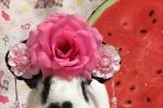 萌兔的诞生! 《比得兔》中国区代言兔悬念揭晓