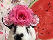 萌兔的诞生! 《比得兔》金沙娱乐区代言兔悬念揭晓