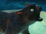 《妖猫传》它才是真正的男主!!!
