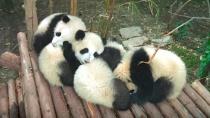 《熊猫们》预告片 让你尽情吸滚滚
