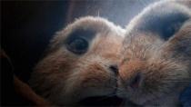 《比得兔》爆笑片段