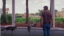 《佛罗里达乐园》之可爱大鸟挡路片段