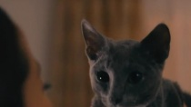 《猫是要抱着的》预告片