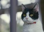 《旅猫日记》预告片