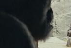 """由《末日崩塌》导演布拉德·佩顿执导,巨石强森实力演绎的好莱坞怪兽灾难巨制《狂暴巨兽》曝光了全新的""""屏息备战""""版海报与预告。新海报背景浓烟滚滚、战火纷飞,曾经繁华的城市街区已经变成断壁残垣,满眼荒凉触目惊心。"""