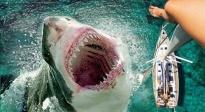 《巨齿鲨》曝光预告 超级鲨鱼现身海域
