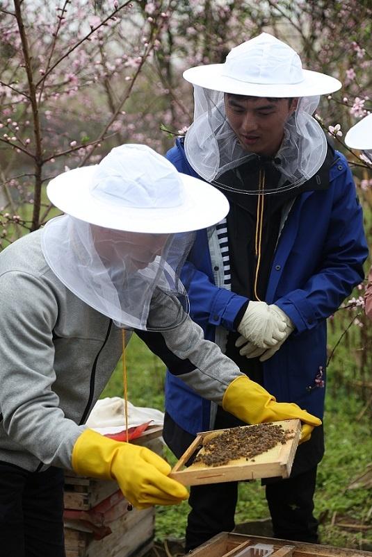 叶祖新《我们在行动》挑战蜂巢取蜜 助蜂农脱贫致富