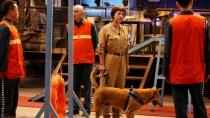 《监狱犬计划》曝宣传片 真挚告白拯救流浪狗