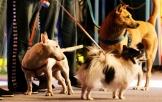 《监狱犬计划》病毒视频 深刻社会意义关注流浪犬现状