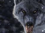 """《阿尔法:狼伴归途》""""匠心""""版世界观概念特辑"""