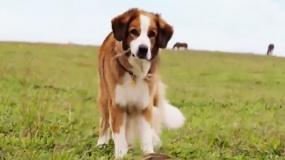 《一条狗的旅程》先导预告