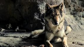 《阿尔法:狼伴归途》点映口碑特辑
