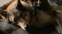 《阿尔法:狼伴归途》众星打CALL特辑