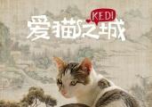 《爱猫之城》中国风海报 土耳其萌猫化身