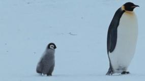 《帝企鹅日记2:召唤》定档预告片
