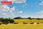 9月29日,首部非洲实地全景拍摄大片《非洲遇见你》的终极海报隆重发布,影片已定档10月19日全国公映。