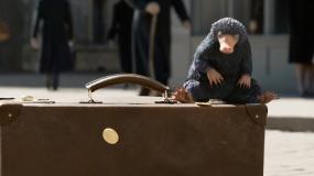 """《神奇动物:格林德沃之罪》""""探寻动物""""版预告"""