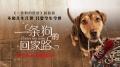 《一条狗的回家路》曝预告 700多天穿越半个美国