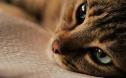 纪录片里的猫才是加了柔光滤镜的猫